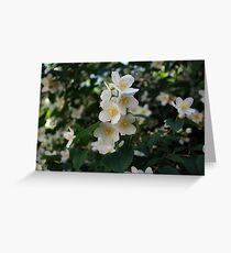 Jasmine, fresh and aromatic Greeting Card