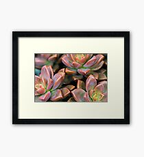 Succulents Red and Green Plant Framed Print