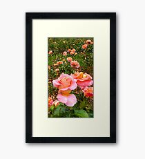 Pink Rose Field -Queen Mary's Rose Garden Framed Print
