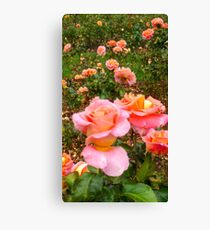 Pink Rose Field -Queen Mary's Rose Garden Canvas Print