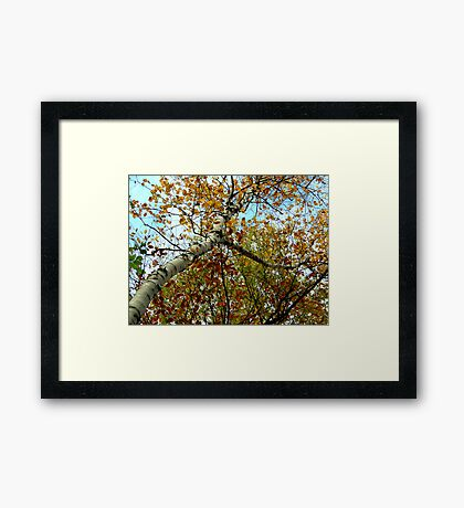 The View Above Framed Print