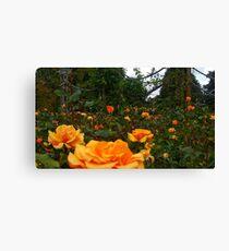 Orange Rose Field -Queen Mary's Rose Garden Canvas Print