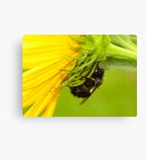 Bee Caught Out In The Cold Rain Canvas Print