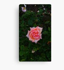 Pink Angular Rose -Queen Mary's Rose Garden Canvas Print