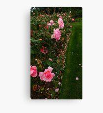 Pink Rose Field (Sideways) -Queen Mary's Rose Garden Canvas Print