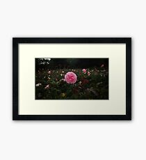 Pink Rose Field II -Queen Mary's Rose Garden Framed Print