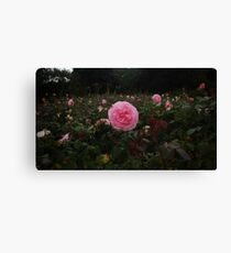 Pink Rose Field II -Queen Mary's Rose Garden Canvas Print