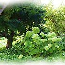 Silent garden by Yvonne Müller