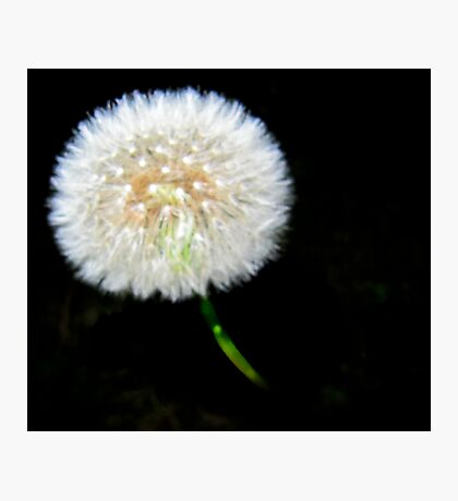 The Dandelion Ball Photographic Print