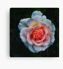 Favorite Rose -Queen Mary's Rose Garden Canvas Print