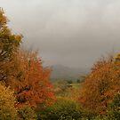 Misty Somerset Autumn by MMCFraser