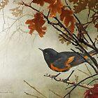 early bird- american redstart by R Christopher  Vest