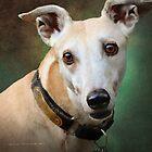 statuesque greyhound portrait by R Christopher  Vest