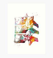 Thoracic vertebrae Art Print