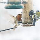 British Birds feeding in the snow by MichelleRees