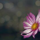 Pink flower  by bonidog