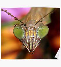 2009 Mantis - #1  Poster