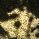 Pebble Pavement - shadow by Orla Cahill Photography