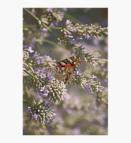 Peek-a-boo Photographic Print