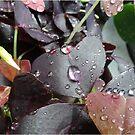 Refreshing rain by Heather Thorsen