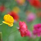 spring colour by Danielle Knight