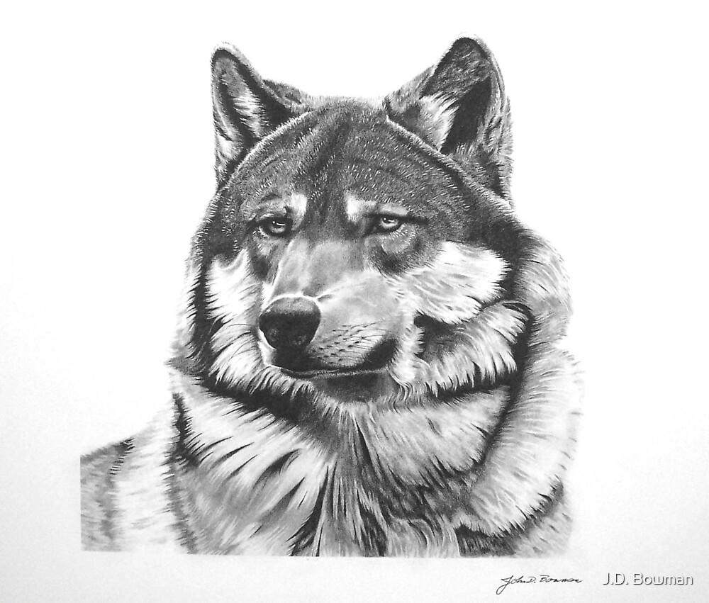 Graphite Excercise (Coyote) by J.D. Bowman