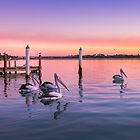 Sunset Pelicans by Stanislaw