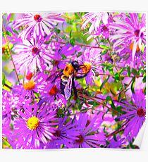 Bumble Bee Bopp Flower Colour Poster