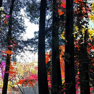autumn photo art by ackelly4