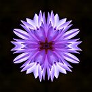MAUVE WATERLILY by Peaches1950