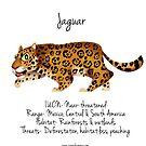 Jaguar by rohanchak