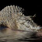 Dozy Crocodile by Elaine Teague