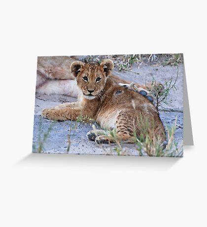 Lion Cub, Central Kalahari Game Reserve, Botswana Greeting Card