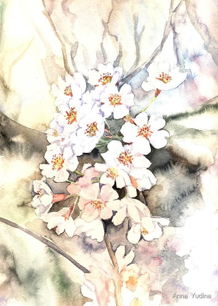 Cherry blossoms by Anna  Yudina