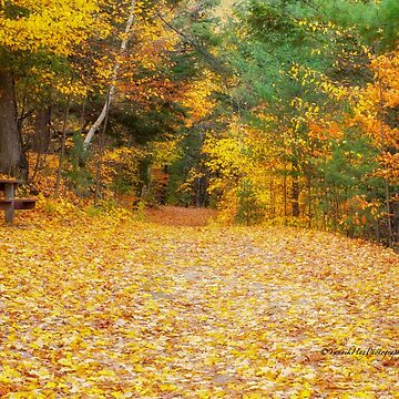 The Picnic Table by Photograph2u