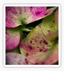 hydrangea pink ans green Sticker