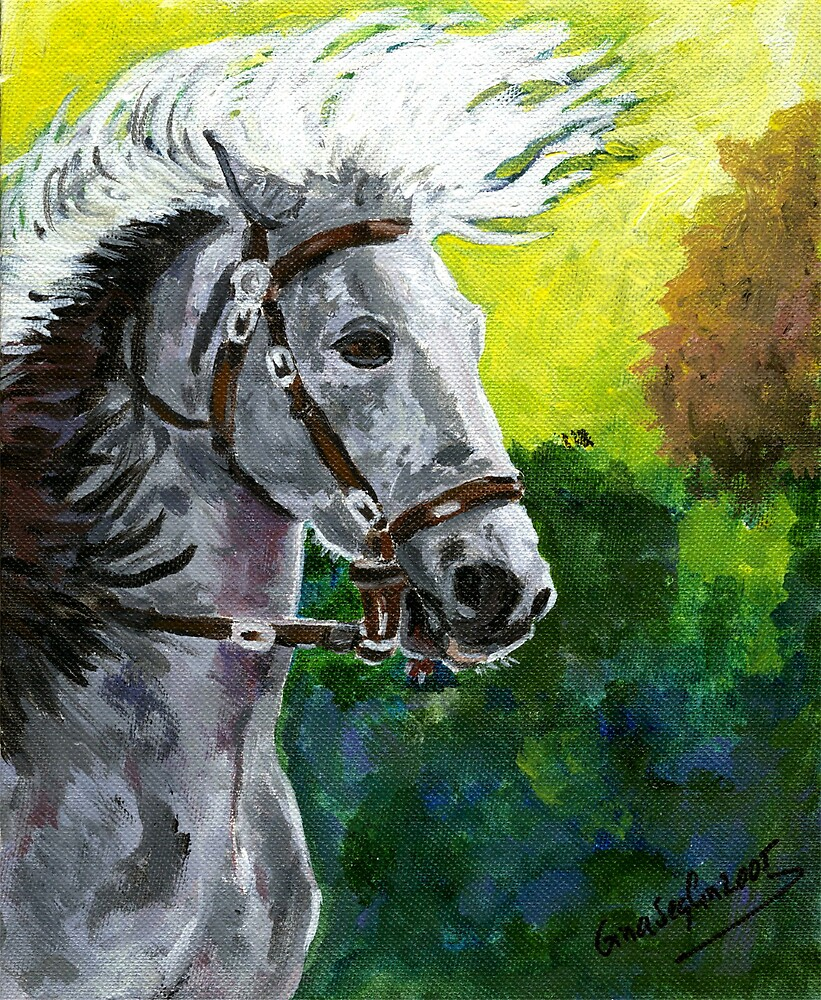 Spanish Barb Horse Portrait by Oldetimemercan