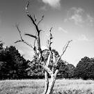 Lone Dead Tree by Shay Murphy