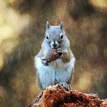 Squirrel with a Pine Cone by FrankieCat