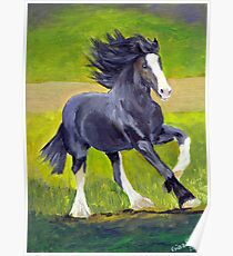 Shire Draft Horse Portrait Poster