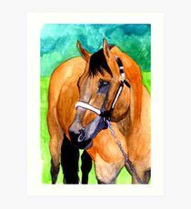 Buckskin Quarter Horse Halter Horse Portrait Art Print