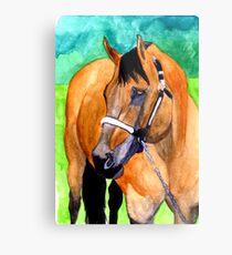 Buckskin Quarter Horse Halter Horse Portrait Metal Print
