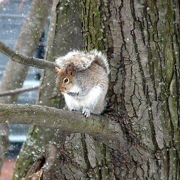 Squirrel by martinb1962