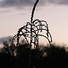 corn stalk by krbraate