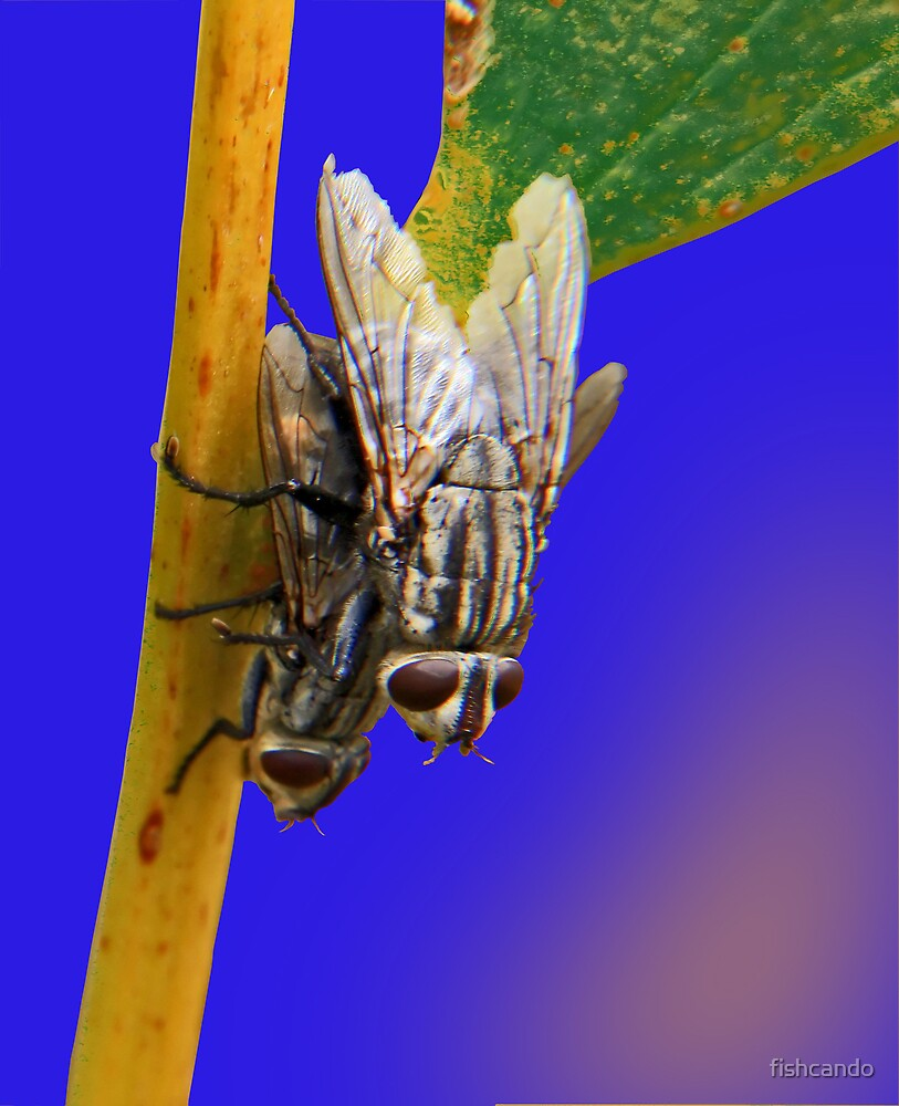 2 flys by fishcando