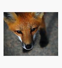 Roxy Photographic Print