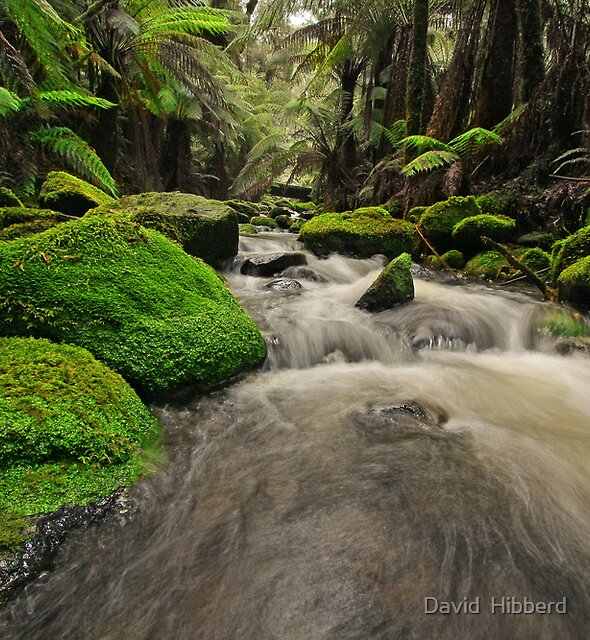 Down Stream by David  Hibberd
