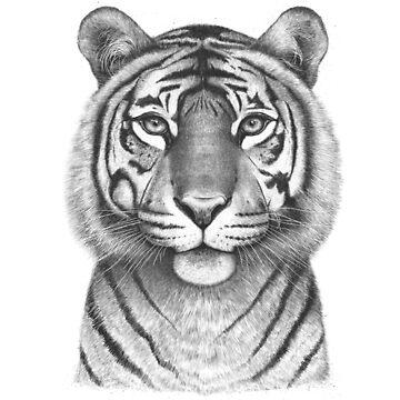 The Tigress by kodamorkovkart