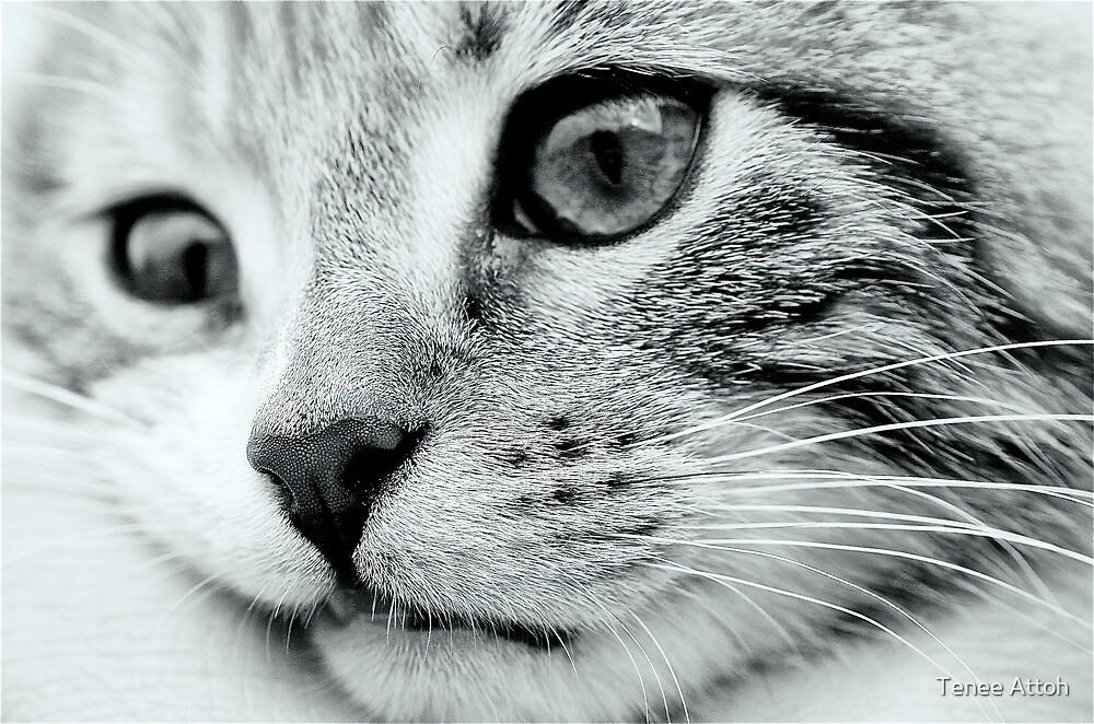 Little big Kitten by Tenee Attoh