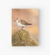 Red-necked Stint on a Rock Hardcover Journal